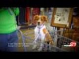 Pet Tips: Dog Behavior In Stores