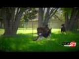 Pet Tips: Heard About Herding?
