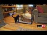 Pet Tips: Dog-cat Introductions
