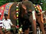 Rejuvenation Camp Pampers 45 Temple Elephants In Tamil Nadu