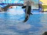 SeaWorld Trainers May Never Swim With Whales Again