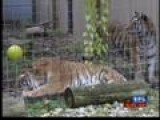 Sanctuary Seeks Community Donations For New Tigers