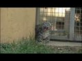 Snow Leopard Cubs At Chattanooga Zoo