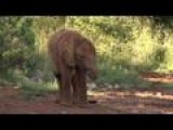 Sanctuary Offers Orphaned Elephants A Chance In Life