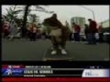 Skateboarding Cat. Really!