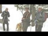 Skier Dies, Dog Stays With Him