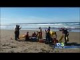 Shark Bites Surfer At Montaña De Oro State Beach