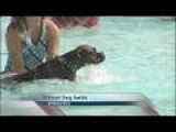 Springfield Dog Swim Tonight