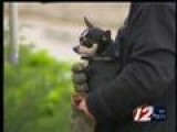 Trapped Dog Rescued From Prov. Drain