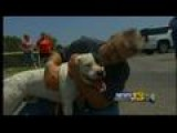 Tornado Survivor Reunited With Dog