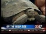 The Wild Side: Desert Tortoise