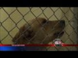 Thousands Support Dyersburg Dog Set To Be Put Down