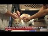 Vaccinate Your Pets Against Rabies