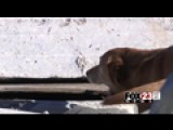 VIDEO: Oklahoma Trains Dogs For Disasters