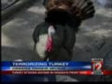 Wild Turkey Terrorizing Michigan Woman At Her Home