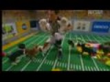 Wacky News: Puppy Bowl