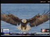 Wild Wednesday: Eagles Etc Event At Lake Degray