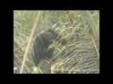 Wild Chimps Found To Enjoy Alcohol In Scientific Survey