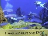 2012 World&#039 S Best Diving And Resorts Video: St Lucia
