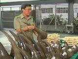 33 Rhino Horns Seized By Hong Kong Customs