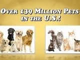 Affordable Pet Related Franchise | Pet Food Franchise Opportunity | Home-based Pet Food Business | Dog And Cat Food Business