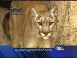 Bill Would Allow Mountain Lion Hunting - Bridget Fargen Reports