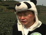 Chinese Man Grows World' S Most Expensive Tea From Panda Dung