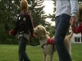 Dog Survives Attack, Helps Autistic Boy Tackle Tough Situations
