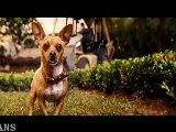 DREW BARRYMORE LIKES BEVERLY HILLS CHIHUAHUA MESSAGE