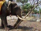 Elephants Clear Thai Flood Debris