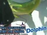 Fort Lauderdale Deep Sea Fishing