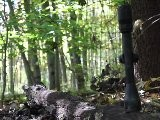 F&S Tests Deer Hunting Scopes For Under $100