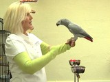 How To Teach Parrots To Step Up And Down