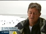 Iceberg Disrupts Penguin Breeding Season