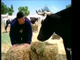 KEVIN JAMES IS UDDERLY DELICIOUS
