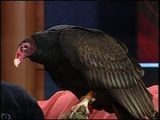 Lily, The Turkey Vulture Stars On Topeka Zoo Friday