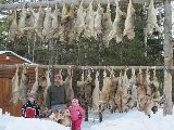 Maine Coyote Hunting With Dogs | Maine Coyote Hunting | 207.540.4101