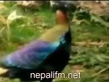 Nepali Rastra Song Farki Aau Santi Timi Hd