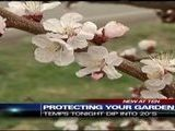 Protecting Your Garden Against Cold Temps