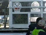 Raw Video: Panda Pair Arrives In UK
