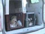 State Struggles To Enforce Dog Breeding Laws