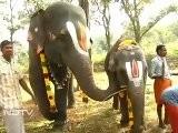 Tamil Nadu Temple Elephants On Vacation