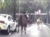 Police Horses Stampede On A Highway In Mexico City