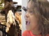 Hospitalized Kids Experience The Zoo Through Google Glass