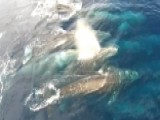 'Super Pod' Of Gray Whales Spotted Off California Coast