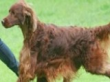 Mystery Surrounding Deadly Poisoning Of Show Dog