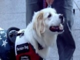 How Service Dogs Are Trained For Veterans