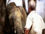 How The Slaughter Of African Elephants Finances Terrorism