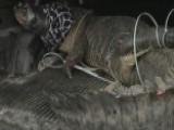 12 Foot Alligator Caught At Texas Strip Mall