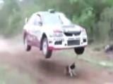 World's Luckiest Dog Barely Avoids Getting Run Over
